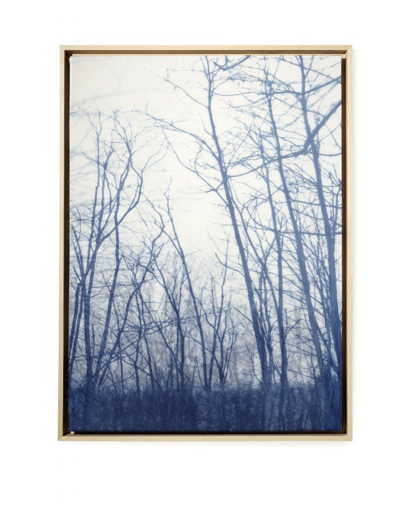 Winter: Stillness